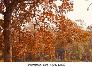 Colourful tree leaves in the autumn season unique photo