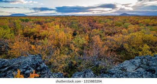 Colourful trees at lake Myvatn in Iceland