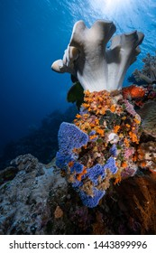 Colourful tropical coral reef scenes along the Wakatobi National Park reef wall in Indonesia
