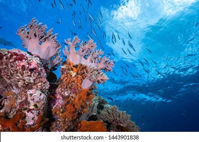 Colourful tropical coral reef scenes found in the shallow depths of Wakatobi National Park in Indonesia