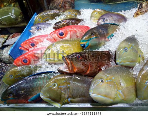 Colourful Tropical Fish Sale Fish Market Stock Photo (Edit