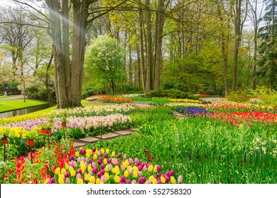 Colourful Tulips flowerbeds, grass and trees in an Spring Formal Garden