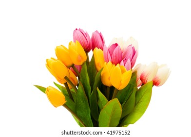 Colourful tulips isolated on the white background