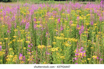 Colourful wild flowers