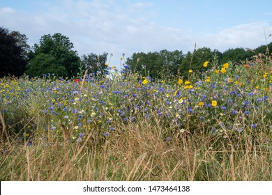 Colourful wild flowers in blues, reds and yellows growing in a meadow surrounded by trees, photographed in early morning in Gunnersbury, West London UK.