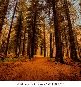 A Colourful woodland scene at Daviott Woods, Inverness, Scotland