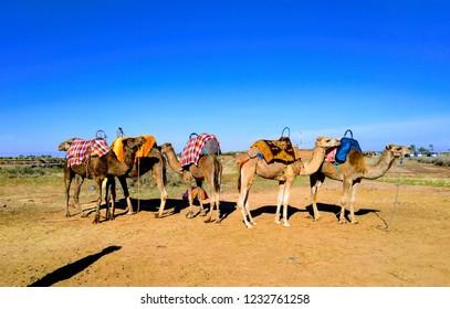 colourfull caravan in morocco