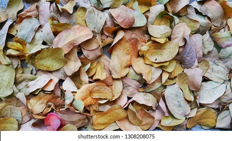 Colourfull dry leaves are beautiful for background texture.