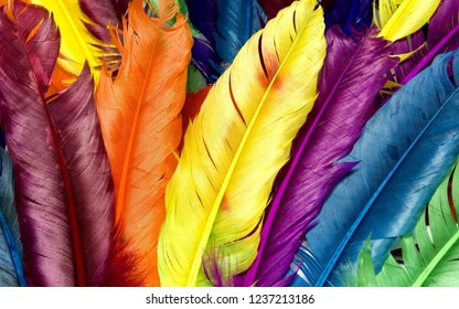 Colourfull Feather of birds