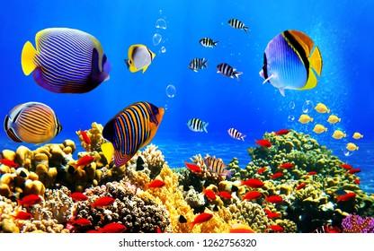colourfull fish underwater