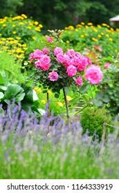 Colourfull flowers - roses, lavender.
