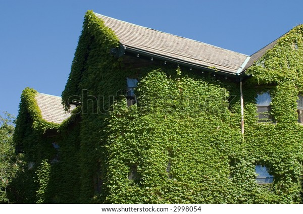Colourfull shot of house covered with ivy