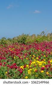 Colours of spring in a field in Mtarfa Malta