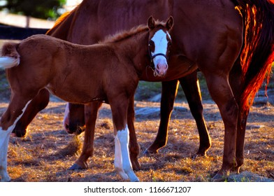 Colt and Mother Kentucky