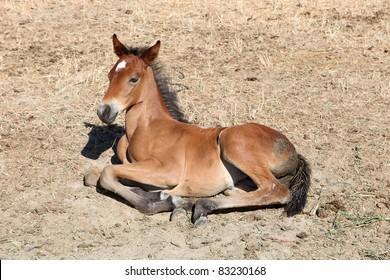 colt on the farm. Spain