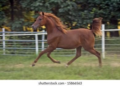 Colt Running