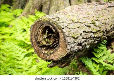 Columbia Shuswap Wood Ln Field/British Columbia/Canada - Jun 03 2018: Second Partial view of rundown trees on the Hemlock Grove Boardwalk