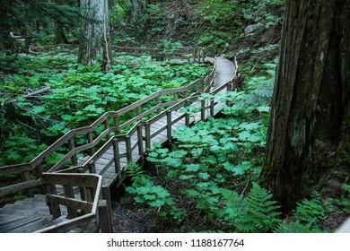 Columbia Shuswap Wood Ln Field/British Columbia/Canada - Jun 03 2018: Third Partial view of Hemlock Grove Boardwalk walkways