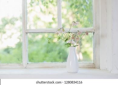 columbine flowers in white vase on windowsill