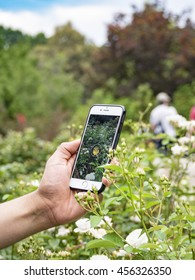 COLUMBUS, OHIO, USA- JULY 21: 2016: Close up hand of a young man playing Pokemon Go, a location-based augmented reality mobile game by Niantic Labs, at the Columbus, Ohio Park of Roses.
