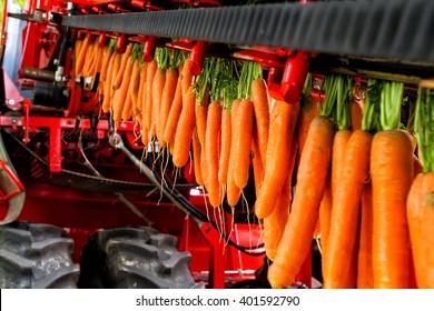 Combine the carrots.