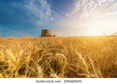 Combine harvest in the golden wheat field