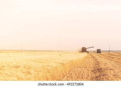 combine to harvest grain in operation in the south of Italy wheat field in Apulia