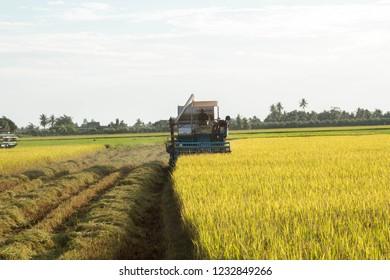 Combine harvest and sunshine