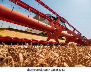 Combine harvester in action on wheat field. Process of gathering a ripe crop from the fields.