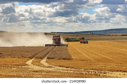 Combine Harvester cutting Wheat in a field in rural england, with Tractor and Trailer in the background