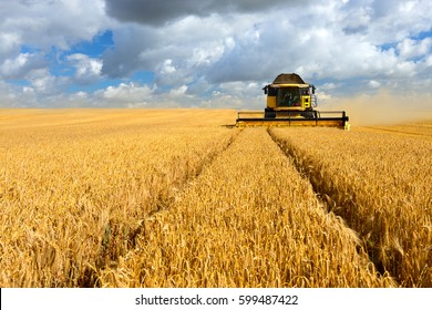 Combine Harvester Cutting Wheat, Summer Landscape of endless Fields under blue sky with clouds