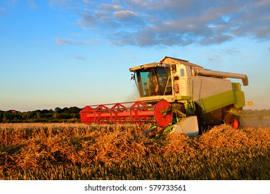 Combine Harvester Cutting Wheat in the Warm Light of the Setting Sun