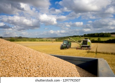 Combine harvester emptying harvested wheat grain into tractor trailer
