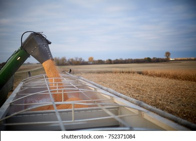 Combine harvester filling a waiting farm truck with freshly harvested maize kernels for transport to the farm or storage depot
