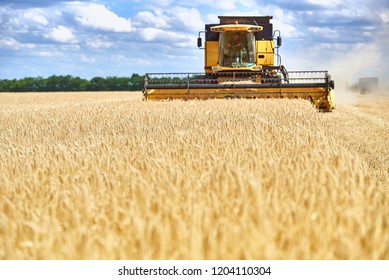 combine harvester gathers the harvest (wheat) in the field