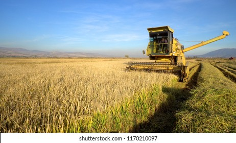 Combine harvester gathers the wheat crop, cinematic steadicam shot