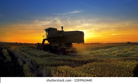 A combine harvester harvesting an oats crop at sunset