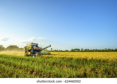 combine harvester is harvesting rice