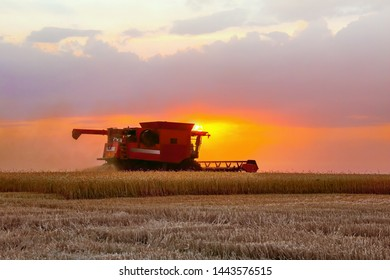 Combine harvester harvests in the field at sunset. Improved bright light, selective focus.