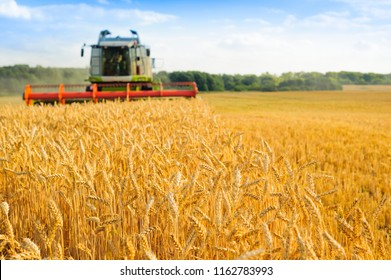 combine harvester harvests golden wheat