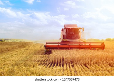 Combine harvester. Harvests ripe wheat. Industry concept