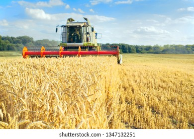 Combine harvester harvests ripe wheat. agriculture field