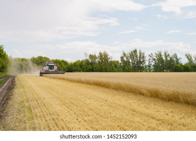 Combine harvester harvests ripe wheat. agriculture tractor