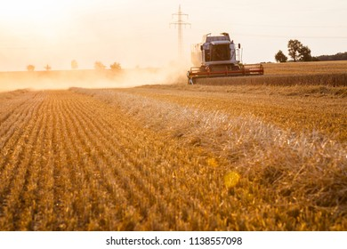 A combine harvester harvests wheat and swirls up the dust.