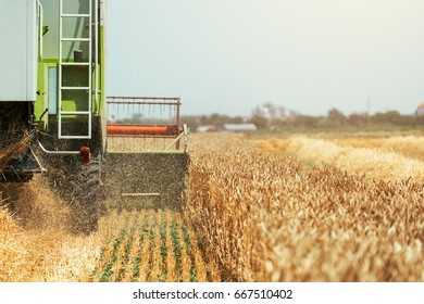 Combine harvester machine harvesting ripe wheat crops in cultivated agricultural field, selective focus