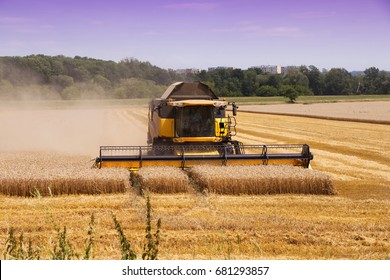 Combine harvester machine harvesting ripe wheat crops. Harvest of wheat field at countryside. Heavy agricultural machinery during the summer harvest.