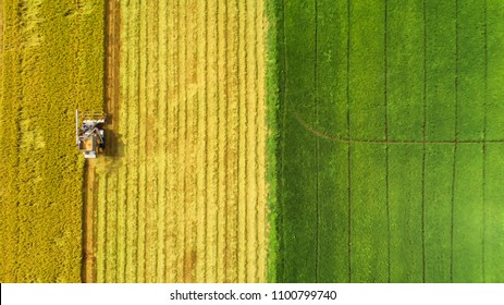 Combine harvester machine with rice farm.Aerial view and top view.