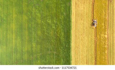 Combine harvester machine with rice farm.Aerial view and top view. Beautiful nature background.