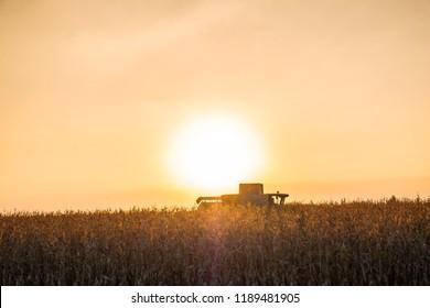 Combine harvester machine working in corn field at sunset. Multi purpose thresher tracktor gathering crop in beautiful sunlit area
