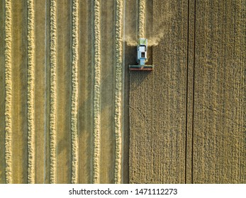 Combine harvester on a cornfield 3